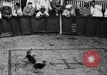 Image of cockfighting Guaynabo Puerto Rico, 1935, second 17 stock footage video 65675052095