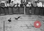 Image of cockfighting Guaynabo Puerto Rico, 1935, second 20 stock footage video 65675052095