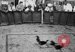 Image of cockfighting Guaynabo Puerto Rico, 1935, second 21 stock footage video 65675052095