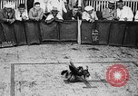 Image of cockfighting Guaynabo Puerto Rico, 1935, second 25 stock footage video 65675052095
