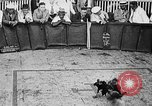 Image of cockfighting Guaynabo Puerto Rico, 1935, second 27 stock footage video 65675052095