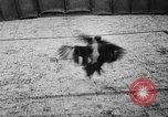Image of cockfighting Guaynabo Puerto Rico, 1935, second 29 stock footage video 65675052095