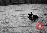 Image of cockfighting Guaynabo Puerto Rico, 1935, second 30 stock footage video 65675052095