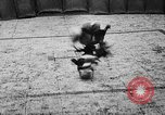 Image of cockfighting Guaynabo Puerto Rico, 1935, second 33 stock footage video 65675052095