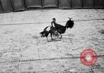 Image of cockfighting Guaynabo Puerto Rico, 1935, second 35 stock footage video 65675052095