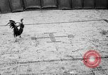Image of cockfighting Guaynabo Puerto Rico, 1935, second 39 stock footage video 65675052095