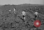 Image of workers San Juan Puerto Rico, 1935, second 16 stock footage video 65675052102