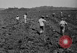 Image of workers San Juan Puerto Rico, 1935, second 17 stock footage video 65675052102
