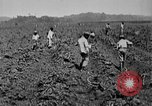 Image of workers San Juan Puerto Rico, 1935, second 18 stock footage video 65675052102
