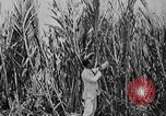 Image of workers San Juan Puerto Rico, 1935, second 29 stock footage video 65675052102