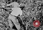 Image of workers San Juan Puerto Rico, 1935, second 41 stock footage video 65675052102
