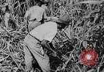 Image of workers San Juan Puerto Rico, 1935, second 42 stock footage video 65675052102