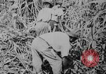 Image of workers San Juan Puerto Rico, 1935, second 43 stock footage video 65675052102