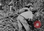 Image of workers San Juan Puerto Rico, 1935, second 44 stock footage video 65675052102