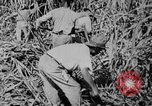 Image of workers San Juan Puerto Rico, 1935, second 45 stock footage video 65675052102