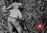 Image of workers San Juan Puerto Rico, 1935, second 46 stock footage video 65675052102
