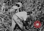 Image of workers San Juan Puerto Rico, 1935, second 47 stock footage video 65675052102