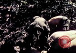 Image of United States 25th Infantry Division Vietnam, 1967, second 16 stock footage video 65675052327