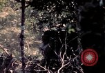 Image of United States 25th Infantry Division Vietnam, 1967, second 59 stock footage video 65675052327