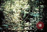 Image of 25th Infantry Division troops Vietnam, 1967, second 25 stock footage video 65675052330