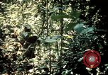 Image of 25th Infantry Division troops Vietnam, 1967, second 28 stock footage video 65675052330