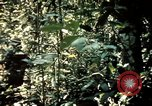 Image of 25th Infantry Division troops Vietnam, 1967, second 29 stock footage video 65675052330