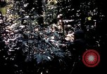 Image of 25th Infantry Division troops Vietnam, 1967, second 33 stock footage video 65675052330