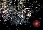 Image of 25th Infantry Division troops Vietnam, 1967, second 36 stock footage video 65675052330