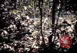 Image of 25th Infantry Division troops Vietnam, 1967, second 41 stock footage video 65675052330