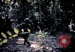 Image of 25th Infantry Division troops Vietnam, 1967, second 47 stock footage video 65675052330