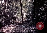 Image of 25th Infantry Division troops Vietnam, 1967, second 53 stock footage video 65675052330