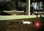 Image of Fallen Vietcong on embassy grounds Saigon Vietnam, 1968, second 2 stock footage video 65675052350