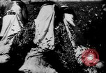 Image of African American picking cotton United States USA, 1930, second 7 stock footage video 65675052586