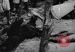 Image of Training of Japanese soldiers in World War II Mariana Islands, 1945, second 59 stock footage video 65675052672