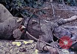 Image of dead bodies of Japanese soldiers Okinawa Ryukyu Islands, 1945, second 7 stock footage video 65675052819