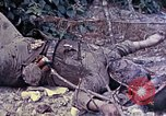 Image of dead bodies of Japanese soldiers Okinawa Ryukyu Islands, 1945, second 9 stock footage video 65675052819