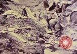 Image of dead bodies of Japanese soldiers Okinawa Ryukyu Islands, 1945, second 29 stock footage video 65675052819