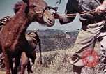 Image of 6th Marine Division 4th Marines Okinawa Ryukyu Islands, 1945, second 24 stock footage video 65675052862