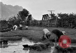 Image of rice paddies Japan, 1920, second 50 stock footage video 65675052988