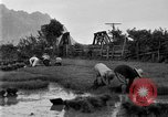 Image of rice paddies Japan, 1920, second 51 stock footage video 65675052988