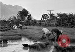 Image of rice paddies Japan, 1920, second 52 stock footage video 65675052988