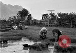 Image of rice paddies Japan, 1920, second 53 stock footage video 65675052988