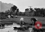 Image of rice paddies Japan, 1920, second 54 stock footage video 65675052988