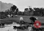 Image of rice paddies Japan, 1920, second 55 stock footage video 65675052988
