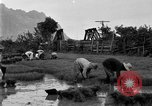 Image of rice paddies Japan, 1920, second 56 stock footage video 65675052988