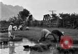 Image of rice paddies Japan, 1920, second 57 stock footage video 65675052988