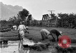 Image of rice paddies Japan, 1920, second 58 stock footage video 65675052988
