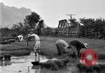 Image of rice paddies Japan, 1920, second 59 stock footage video 65675052988
