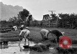 Image of rice paddies Japan, 1920, second 60 stock footage video 65675052988