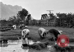 Image of rice paddies Japan, 1920, second 61 stock footage video 65675052988